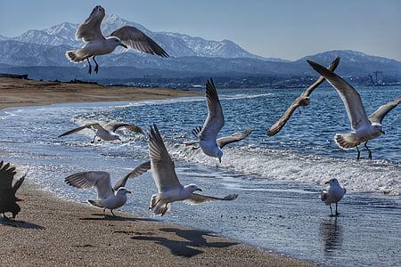 flock of white bird