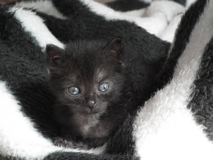 black kitten on white textile