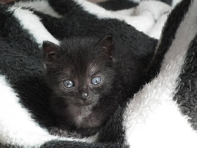 black kitten on white textile