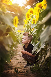 boy wearing black shirt sitting beside sunflower flowers