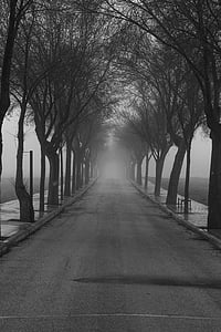 clear road between leafless trees