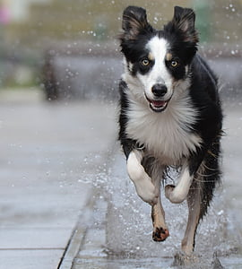 selective focus photo of dog running on puddle