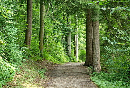 pathway near green foliage trees