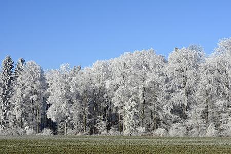 white tree photography