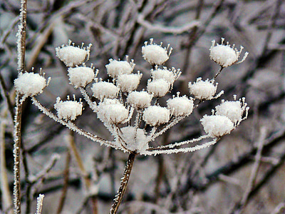 snow on flowers