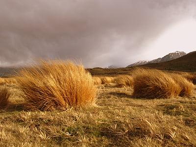 landscape photo of hay
