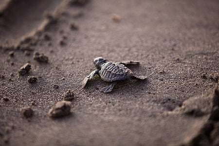 sea turtle on sand