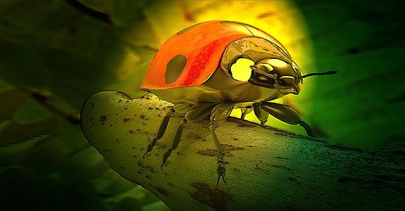 selective color photography of ladybug