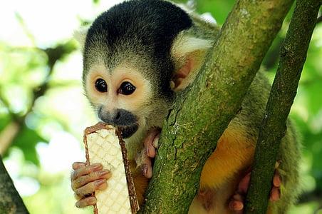 monkey on tree eating wafer during daytime