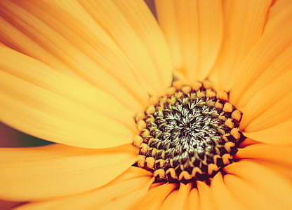 micro photography of yellow petaled flower