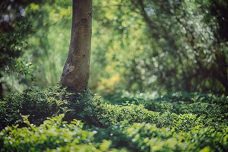 green plants under trees