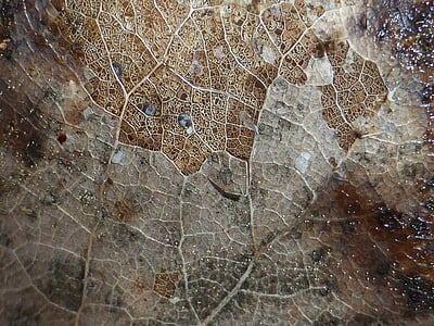leaf, texture, natural, plant, environmental, macro