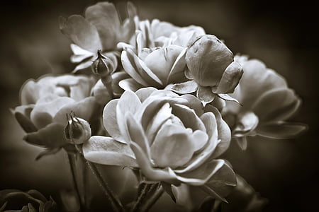 greyscale photo of flowers