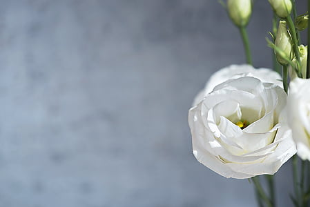 shallow photo of flower