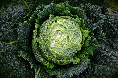 selective photograph of cabbage