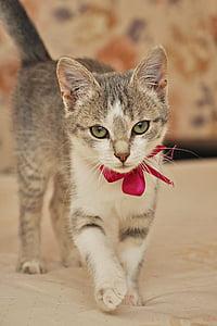 silver tabby kitten wearing red ribbon