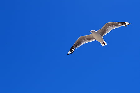 seagull at sky