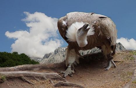 white and gray bird on brown soil