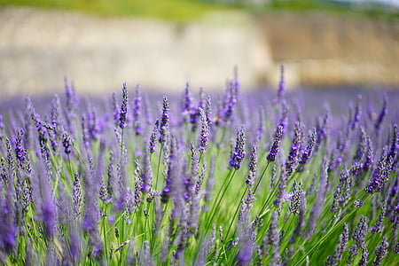 selective focus photography of field of purple flower