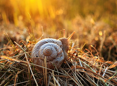 selective focus photo of brown snail on brown grass at daytime
