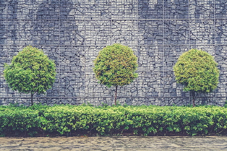 green leaved trees and plants