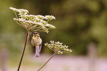 white and brown bird on white cluster flower