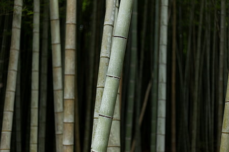 photo of gray bamboo