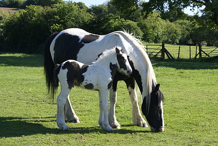 white and black horse on green grass during daytime