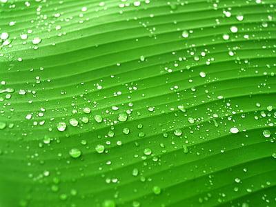 drop waters green banana leaf