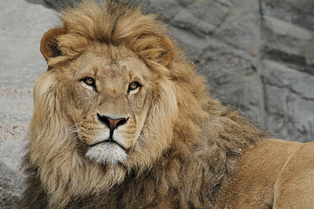 shallow focus photography of lion