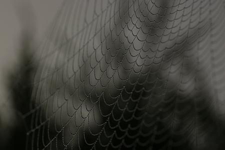 closeup photography of cobwebs