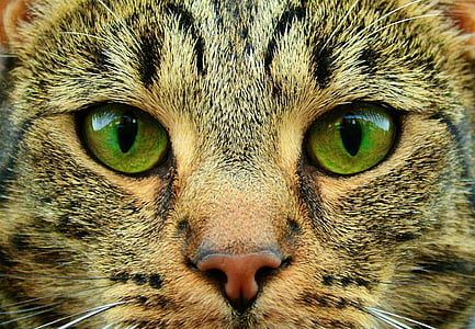 closeup photography of gray tabby cat