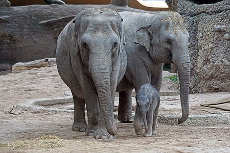 photo of elephants