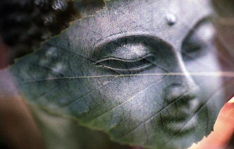 Buddha head illustration