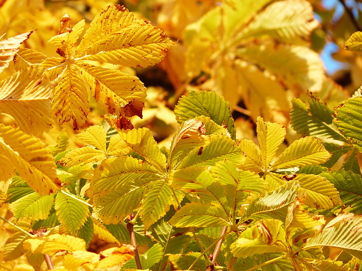green and yellow leafed plants during daytime