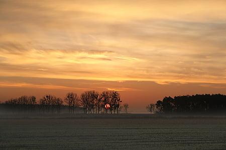 bare tree under white and orange skies during sunset