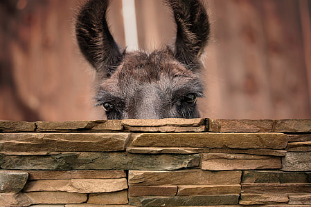 shallow focus photography of gray donkey