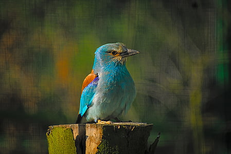blue and grey bird on tree branch
