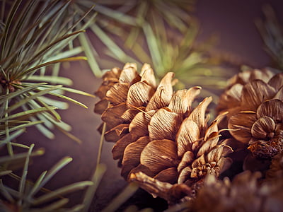 shallow focus photography of brown conifer