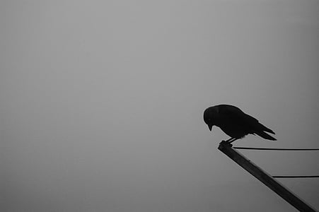 silhouette of bird on brown wooden rod