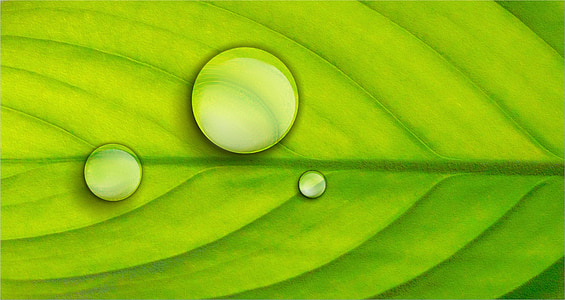 green leaf with three dew drops