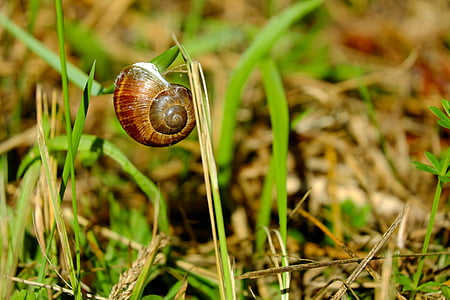 brown snail on green grass