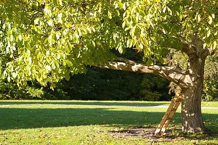 brown metal ladder hang on green leafed tree at daytime