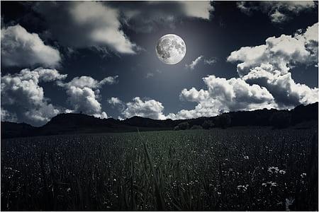field of grass under tje moon