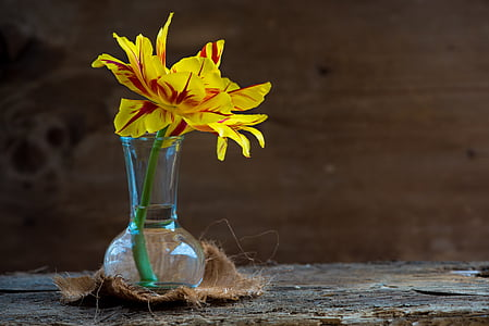 yellow petaled flower on vase