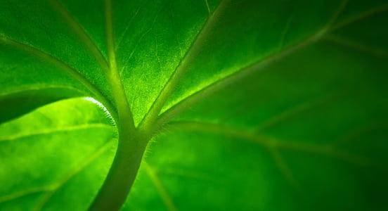 closeup photo of plant stem