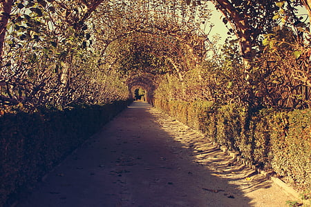 empty pathway under arch of foliage at daytime