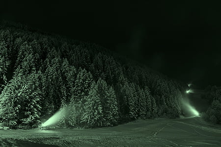 snow-covered forest during night