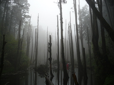 photo of bare forest near river during daytime