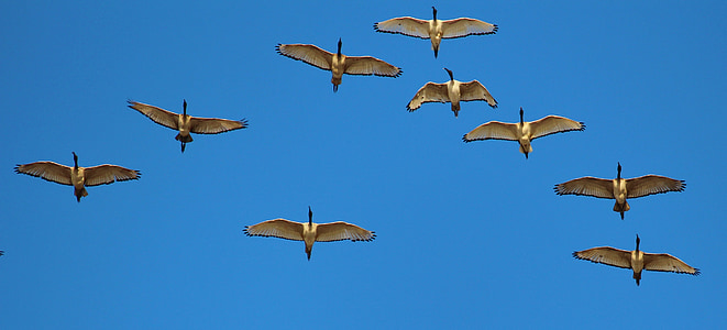 panoramic photography of flying birds in the sky